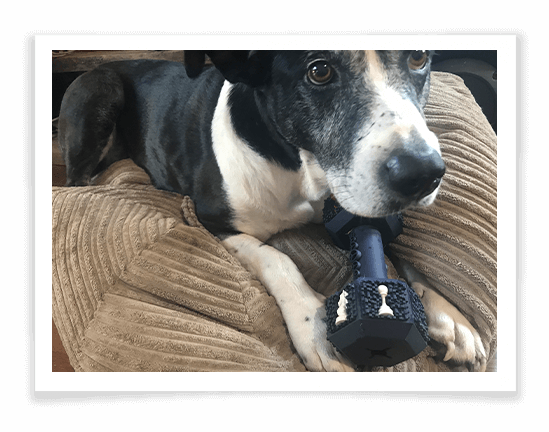 Iokheira Dog Chew Toys for Aggressive Chewers