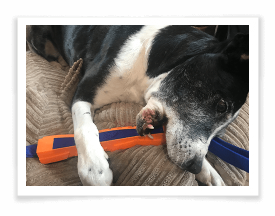 Nerf Mega Tuff Competition Stick Product Review 1
