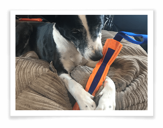 Nerf Mega Tuff Competition Stick Product Review 2