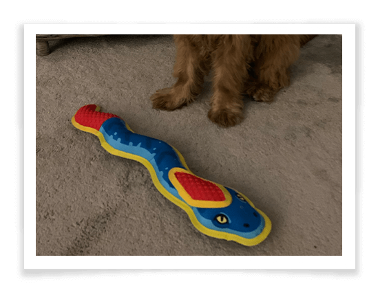 Ruffer and Tuffer Snake Product Review