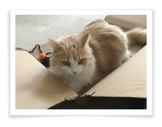 Spide Cat Interactive Toy Product Review 1