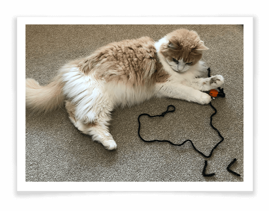 Spide Cat Interactive Toy Product Review 3