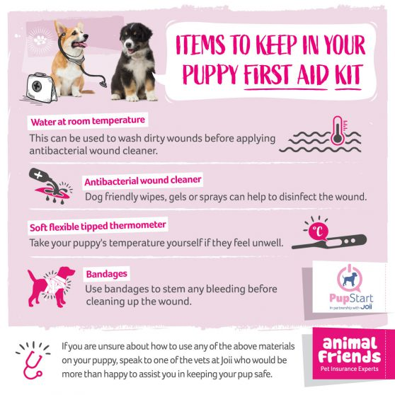 Essential items for your puppy first aid kit