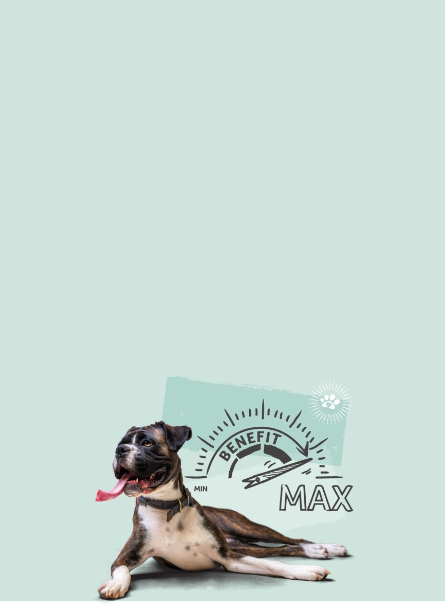Max Benefit dog insurance