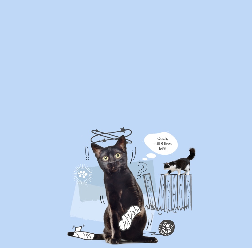 Accident Only cat insurance